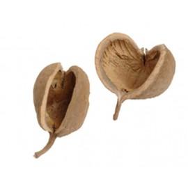 Buddhas nut