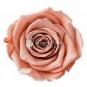 Rose lyophilisée Moyenne