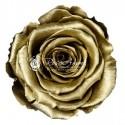 Rose lyophilisée Metallic XL