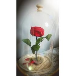 """Rose éternelle """"La Belle & la Bete"""""""