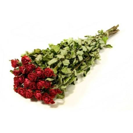 Botte de Roses sechées