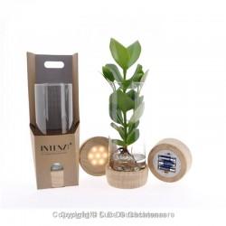 Led tube vase avec plantes