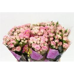 10 roses branchues