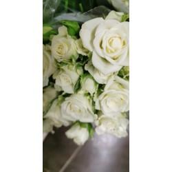 50 roses branchues