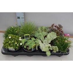4 plantes vivaces mixtes