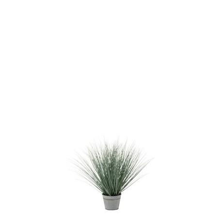 Vase Herbe